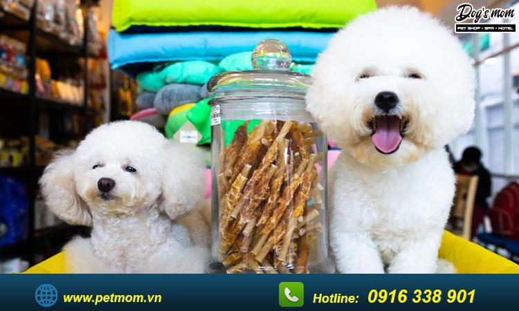 Tìm hiểu về chó poodle